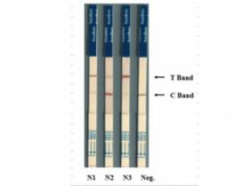 Cas12/13专用核酸检测试纸条
