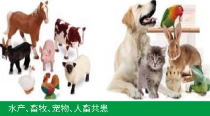 动物疫病检测试剂盒