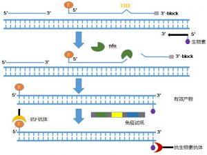 可实现的核酸胶体金检测法
