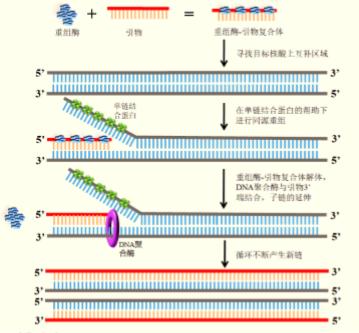生命科学技术潮流的新宠儿-多酶恒温快速扩增技术(MIRA)