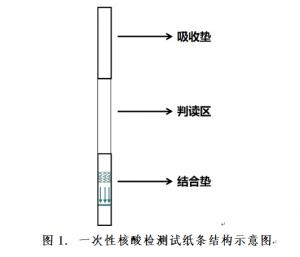 彩虹型一次性核酸检测试纸条